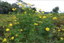 Kementan Dorong Pengendalian OPT Hortikultura Ramah Lingkungan - JPNN.com