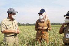 Mentan Syahrul Yasin Limpo: Pertanian Harta Karun Bangsa - JPNN.com