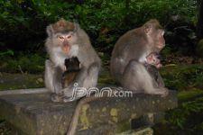 Ingat ! Pertunjukan Topeng Monyet Sudah Resmi Dilarang - JPNN.com
