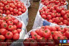9 Efek Samping Mengonsumsi Tomat Bagi Kesehatan - JPNN.com