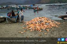 Jutaan Ikan Mati di Danau Toba, Pemkab Samosir Bilang Begini - JPNN.com
