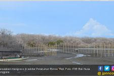 Duh, Mangrove di Sekitar Pelabuhan Benoa Mulai Rusak - JPNN.com