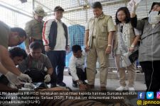 Usai Proses Penyelematan, Sepasang Harimau Sumatra Segera Dikirim ke Habitat Aslinya - JPNN.com