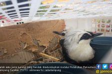Balai Karantina Bardarlampung Gagalkan Penyeludupan Ribuan Ekor Burung - JPNN.com