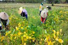 Hari Tani Nasional: Petani Kedelai Sedang Resah karena Harga Anjlok - JPNN.com