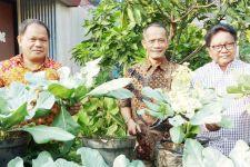 BKP Kementan Mengembangkan KRPL menjadi Family Farming - JPNN.com
