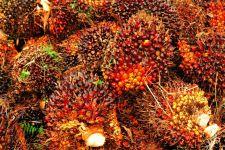 Begini Kontribusi Sektor Kelapa Sawit dalam Meningkatkan Ekonomi Nasional - JPNN.com