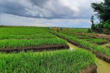 Petani Sumedang Panen Padi Hingga 12 Ton Per Hektare - JPNN.com