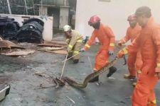 Ular Sanca Kembang 3 Meter Bikin Geger Warga Pondok Rangon - JPNN.com