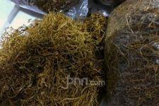 Pemerintah Diminta Segera Melakukan Kajian Ilmiah Produk Tembakau Alternatif - JPNN.com