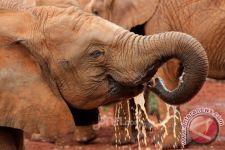 Bukan Ulah Pemburu atau Bakteri, Kematian Ratusan Gajah di Bostwana Jadi Misteri - JPNN.com