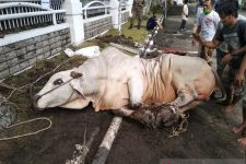 DKM Al Aqsha BSD Salurkan 2.500 Daging Kurban Hingga ke Desa Terpencil - JPNN.com