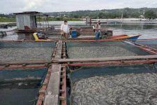 109 Ton Ikan Nila Mati Mendadak di Danau Toba - JPNN.com