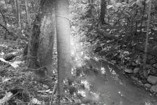 Mayat Pria Ditemukan di Hutan Kota, Leher Terikat Tali, Bikin Merinding - JPNN.com