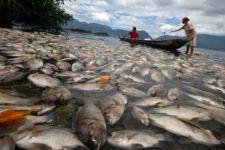 Lima Ton Ikan Mati Mendadak di Danau Maninjau - JPNN.com