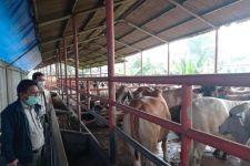 Kunjungi RPH, Kementan Pastikan Ketersediaan Daging Sapi Aman untuk Lebaran - JPNN.com