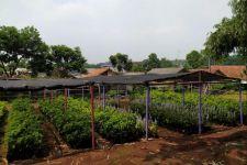 Karang Taruna Kecamatan Cibinong Berdayakan Masyarakat Lewat Pertanian - JPNN.com