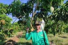 Kementan Dorong Indramayu Jadi Role Model Kampung Buah - JPNN.com