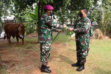 Sambut Hari Raya Iduladha, KSAL Laksamana Yudo Serahkan Hewan Kurban - JPNN.com