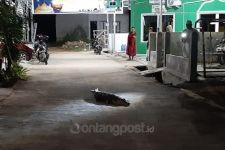 Waduh! Buaya Masuk ke Tengah Pemukiman, Warga Bergeming - JPNN.com