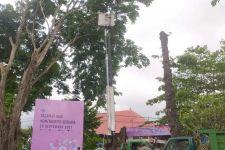 DLHK Denpasar Makin Agresif Pangkas Pohon Perindang di Tengah Kota - JPNN.com Bali