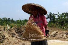 Sektor Pertanian Tuai Pujian dari Rizal Ramli: Yang Lain Rontok - JPNN.com