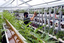 Kementan Bakal Bangun 2.358 Kampung Holtikultura pada 2022 - JPNN.com