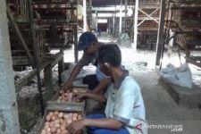 Harga Telur Ayam di Blitar Terus Merosot, Banyak Peternak Gulung Tikar - JPNN.com Jatim