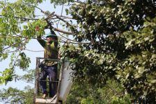 Antisipasi Musim Hujan, Pemkot Surabaya Mulai Pangkas Ranting Pohon-pohon Tua - JPNN.com Jatim