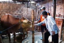 Dorong Produksi Daging Nasional, Akademisi Unair Bantu Peternak Lamongan Kembangkan Bibit Unggul Sapi Jantan - JPNN.com Jatim