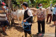 Tingkatkan Kualitas Daging, Probolinggo Mulai Pengembangan Sapi Wagyu - JPNN.com Jatim