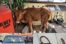 4 Anggota Komplotan Pencuri Sapi di Jember Diciduk, Ternak Nyaris Terjual - JPNN.com Jatim