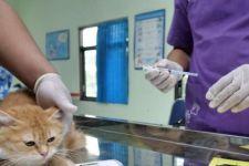 200 Kucing di Madiun Diberikan Vaksin Rabies - JPNN.com Jatim