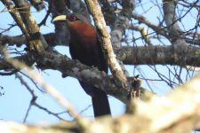 Sembilan Burung Langka ini Ditemukan di Hutan Lindung Malang - JPNN.com Jatim