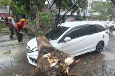 Akibat Angin Kencang, Pohon Tumbang di 10 lokasi di Jember, Satu Mobil Tertimpa - JPNN.com Jatim