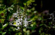 7 Herbal Ajaib Ini Bisa Bikin Asam Urat Langsung Ambyar Lho - JPNN.com