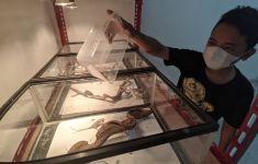 Hobi Pelihara Reptil, Rizky Beberkan Cara Ternak hingga Hasilkan Pundi Rupiah - JPNN.com