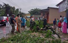 Hujan Lebat, Belasan Pohon Tumbang Menimpa Rumah Sampai Mobil di Depok - JPNN.com