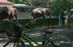 Tegas, Pengelola Kebun Binatang Gembira Loka Zoo Tolak Ratusan Wisatawan - JPNN.com