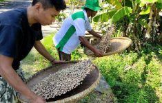Kementan Dorong Pengembangan Tanaman Kapulaga, Keuntungannya Menggiurkan Lho... - JPNN.com