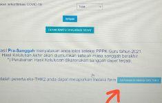 Peserta PPPK Guru Tahap I, Periksa Akun SSCASN, Ada yang Harus Diisi, Penting - JPNN.com