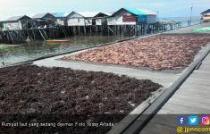Harga Rumput Laut Moncer, Petani Sebut Permintaan Meroket - JPNN.com