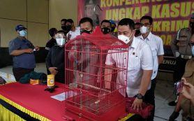 Jual Burung Cendrawasih, M Diamankan Polisi Sidoarjo - JPNN.com
