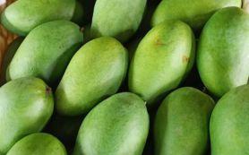 1,3 Ton Mangga Hasil Pertanian Jatim Diekspor ke Singapura, Peran eTaniSangat Besar - JPNN.com