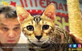 Ribuan Hewan di Banyuwangi Disuntik Rabies, Ini Sebabnya - JPNN.com Jatim