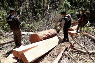 Pemodal Pembalakan Liar di Hutan Lindung Sendiki Malang Diharapkan Segera Terciduk - JPNN.com Jatim