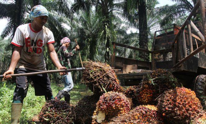 Pekerja Sawit dan Produksi CPO - JPNN.com